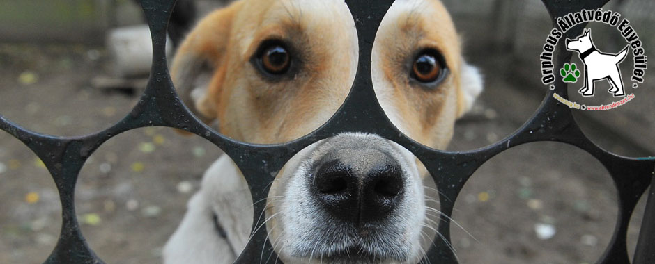 állatmenhely kutya gazdikereső örökbe fogadás